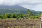 Feld zwischen den Vulkanen
