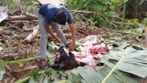 Ein Rind für 450 Ometepinos